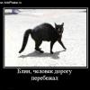 Прикмети про кішок