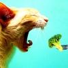 Блювота у кішки. кішка блює білою піною, жовчю, кров'ю