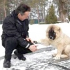 Секрет дресирування. як навчити собаку командам максимально швидко?