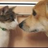 Співжиття кішок з кішками і собаками: хто кого?