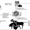 Токсоплазмоз у кішок, симптоми і лікування