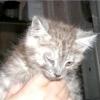 У кішки гниють очі - що робити ?!