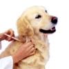 Вакцинація собак