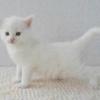 Вага кошенят по місяцях