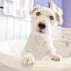 Виділення з піхви у собаки