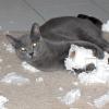 Стрес у кішки: причини виникнення та способи вирішення