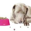 Що робити, якщо собака не їсть