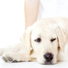 Що робити, якщо собаку нудить