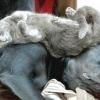 Як подружити собаку з людьми і тваринами? як прибрати агресію до інших собак, котам і людям?