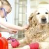Як промити шлунок собаці