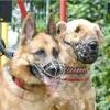 Як вибрати намордник для собаки і привчити її до обновці?