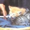 Як вигодувати кошеня без кішки