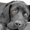 Як закапати очі собаці