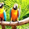 Якого папуги легше навчити говорити