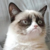 Самий сердитий кіт у світі - grumpy cat: 7 кроків до популярності
