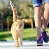 Скільки коштує британський, шотландський висловухий кошеня, а так само кошенята інших порід