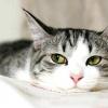 Скільки коштує стерилізація кішки. скільки коштує кастрація кота