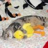 Скільки часу кішка спить на добу?