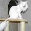 Стрижка кішок і котів