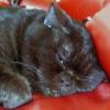 У кішки запор, що робити?