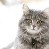 Характер кішок - такий різний