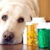 Як дати собаці рідке ліки або звичайну таблетку?