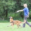 Як навчити собаку командам