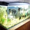 Як очистити скла в акваріумі