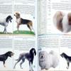 Як визначити породу собаки