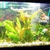 Як доглядати за акваріумними рослинами