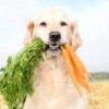 Які вітаміни потрібні для цуценяти і дорослого собаки?