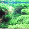 Різновиди акваріумних рослин