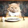Скільки разів на день годувати кішку?
