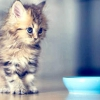 Поради від «зоошеф» на варті котячої фігури