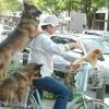Способи фізичного розвитку собаки.