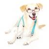 Усипляння тварин: вартість евтаназії собак і кішок на дому, поради господареві.