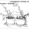 Шкідливі та отруйні рослини і квіти для кота