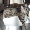 Вибираємо котячий туалет і аксесуари до нього