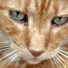 Захворювання очей у кішки